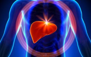 Печеночная энцефалопатия: причины, симптоматика и лечение